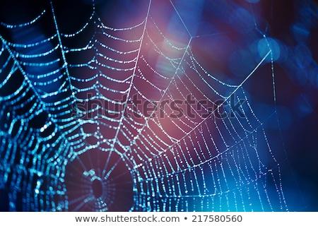 örümcek ağı parlak mavi damla su ışık Stok fotoğraf © vapi