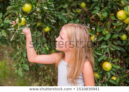Young girl picking fruit Stock photo © IS2