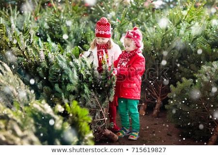 Kardeş kardeş noel ağacı çocuk eğlence portre Stok fotoğraf © IS2
