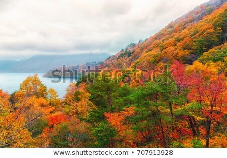 береза желтый листьев холме осень пейзаж Сток-фото © Kotenko