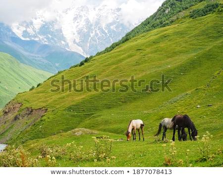 Paard bergen Georgië grijs stad Stockfoto © Kotenko