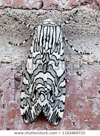 Tigris invázió nagyobb csoport házigazda növény gyönyörű Stock fotó © Alvinge