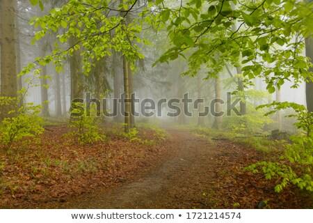 wandelen · parcours · bos · bergen · zomer · zonlicht - stockfoto © lianem