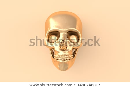 human scull isolated Stock photo © ozaiachin