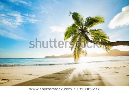 beautiful and exotic island, sea, coasts Stock photo © photography33