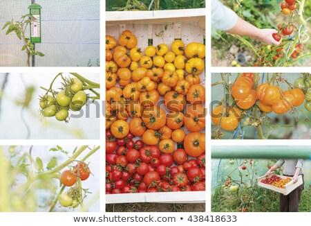 фрукты · мозаика · банан · апельсинов · клубники · вишни - Сток-фото © photography33