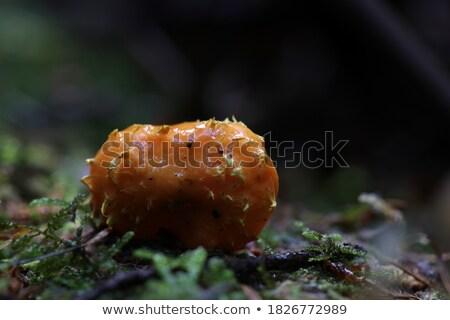 菌 成長 苔 家族 森林 葉 ストックフォト © jakatics