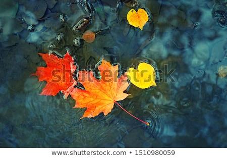 Sonbahar yansımalar düşmek yaprakları gölet Stok fotoğraf © macropixel