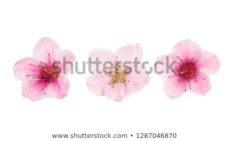 amandel · roze · tak · boom · hemel · voorjaar - stockfoto © sirylok