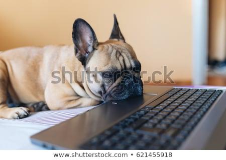 Stockfoto: Aptop · Met · Slapende · Puppyhond