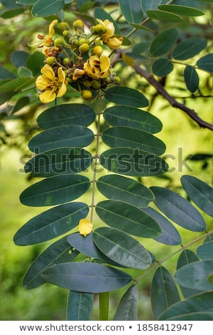 Leaves, twigs, green, yellow, beautiful, suitable for a background. Stock photo © muang_satun