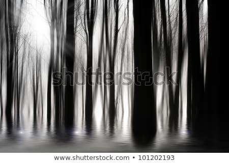 Luar árvore preto e branco céu Foto stock © suerob