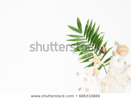 green sea shells with sand as background Stock photo © mycola