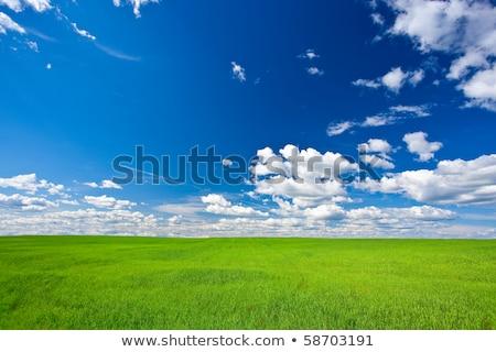 Paisagem verde blue sky branco nuvens primavera Foto stock © mycola