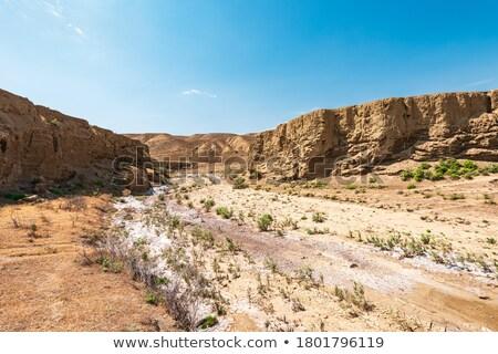 Sár sivatag forró törött föld föld Stock fotó © michaklootwijk