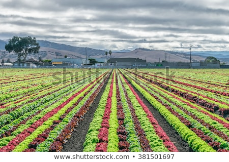 Mixed cultivation Stock photo © rbiedermann