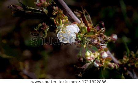 美しい 春の花 自然 ぼけ味 バナー ストックフォト © H2O