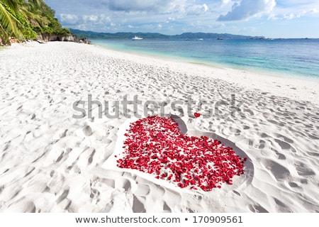 ладонями женщину роз красный Сток-фото © prg0383