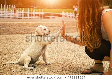 Stock fotó: Girl And Puppy At Sunset