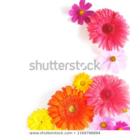 8 ピンク 孤立した 白 花 背景 ストックフォト © compuinfoto