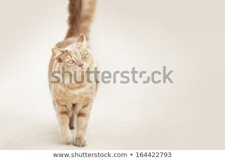 白 猫 スタジオ 階 幸せ 美 ストックフォト © vauvau