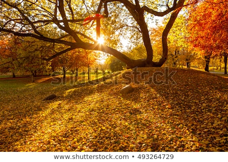 Golden autumn leaves covering the lawn while the sun shines through the beautiful pattern Stock photo © Klinker