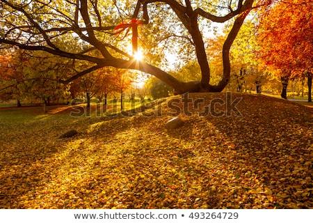 dourado · gramado · sol · belo · padrão - foto stock © klinker