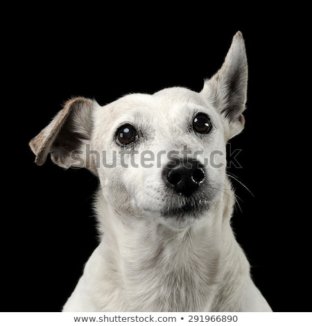 Grappig hond vliegen oren portret donkere Stockfoto © vauvau