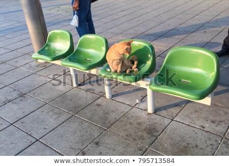 Kot przystanek autobusowy ilustracja drogowego studentów funny Zdjęcia stock © adrenalina