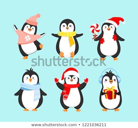 Vector flat style set of christmas penguin. Isolated on white ba Stock photo © curiosity