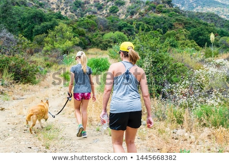 mulher · caminhada · cachorro · bonitinho · bigle - foto stock © kzenon