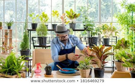 Senior man trimming plants with pruning shears Stock photo © wavebreak_media