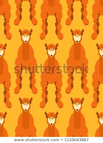 Camel pattern seamless. Animal UAE. Beast of desert background.  Stock photo © popaukropa