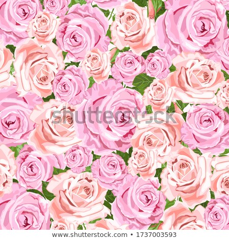pink and beige roses wreath for greeting card and envelope stock photo © tasipas