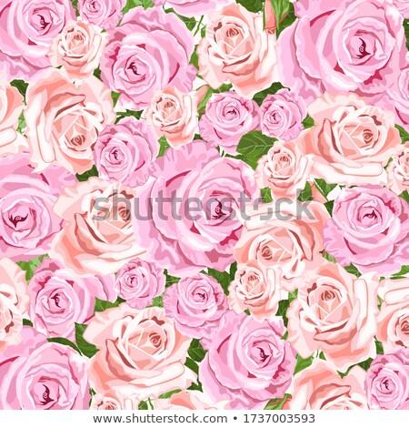 roze · beige · rozen · vector · wenskaart - stockfoto © tasipas