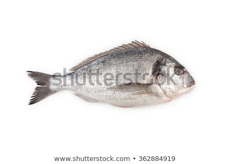 海 魚 食品 青 白 新鮮な ストックフォト © Alex9500