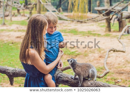 Mom and son are fed Ring-tailed lemur - Lemur catta. Beauty in nature. Petting zoo concept Stock photo © galitskaya