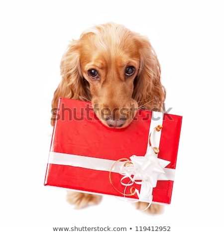 new red tape for dogs  Stock photo © OleksandrO