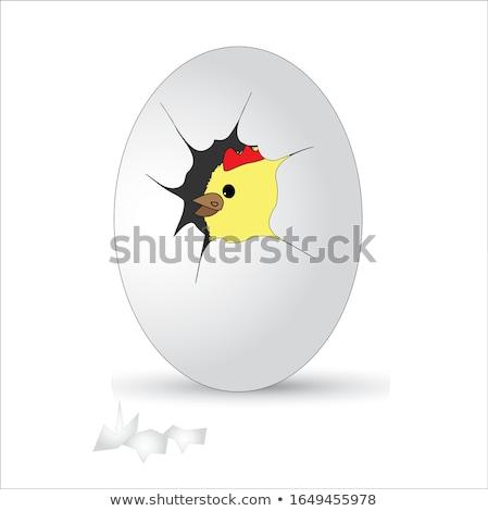 Chick Hatching Inside Egg Drawing Stock photo © patrimonio