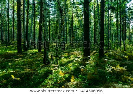 Zöld liget fák fű Stock fotó © Leonardi