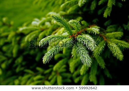 close up of christmas gift and fir wreath on snow stock photo © dolgachov