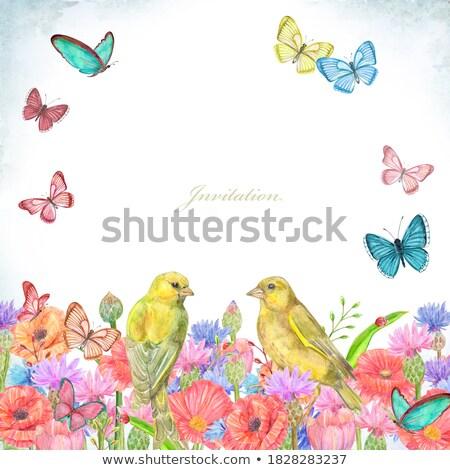 çift çayır çiçekli bitkiler uçan kuşlar Stok fotoğraf © robuart