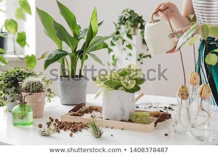 Cultivating plants at home Stock photo © ayelet_keshet