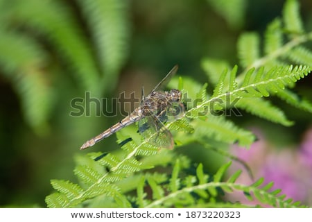 Yellow butterfly rest on fern leaf Stock photo © Ansonstock