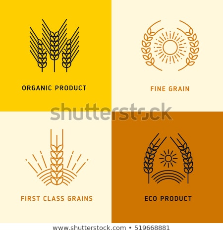classes of wheat grain Stock photo © deyangeorgiev