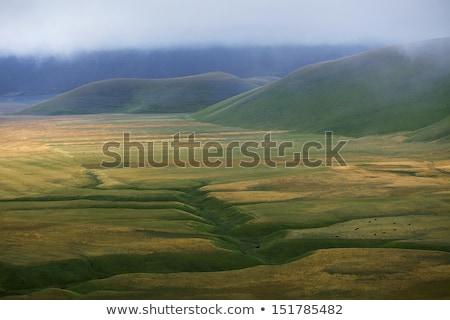 Mountain hazy daybreak stock photo © wildman
