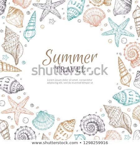 シェル 表示 古い 自然 海 ストックフォト © sharpner
