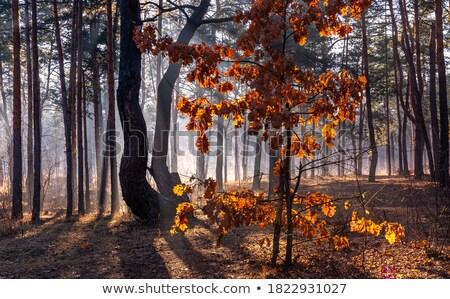 Stock fotó: Erdő · napfény · fényes · erős · zöld · fa