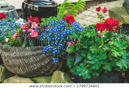Original residential garden landscaping Stock photo © Julietphotography