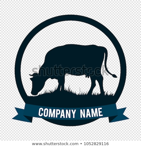 black and white cow eating grass stock photo © neirfy